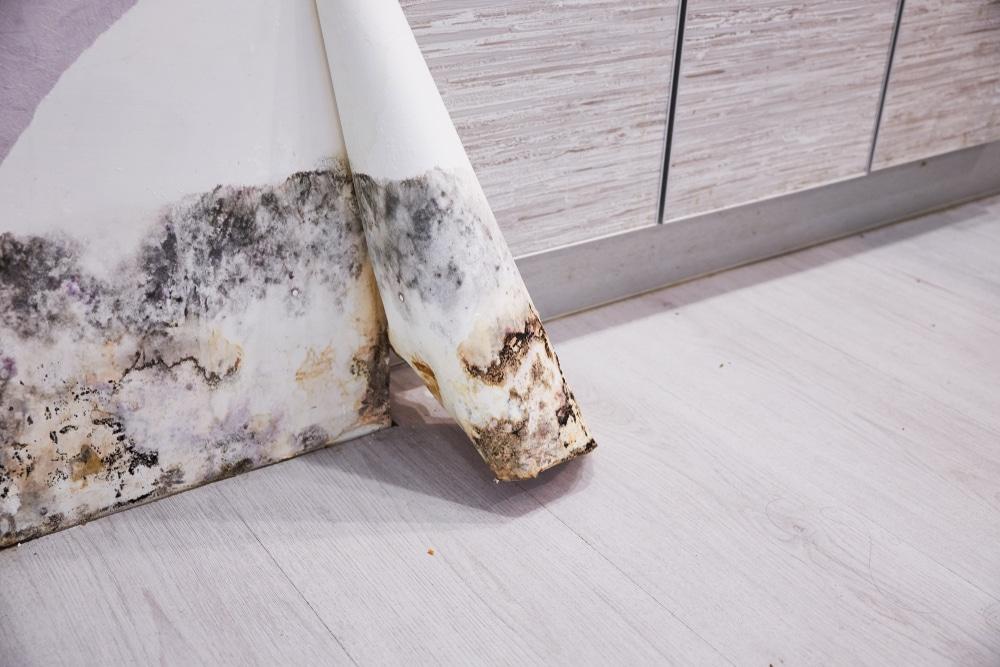 Moisissures et champignons, comment s'en débarrasser ?